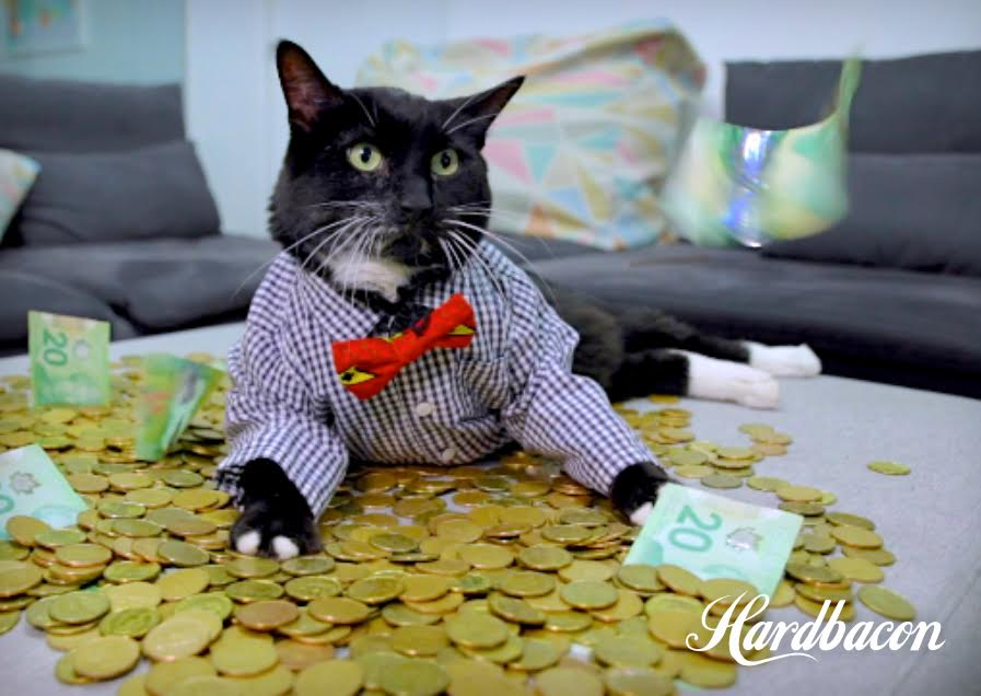 Hardbacon lance sa campagne sociofinancement, atteint 47% de son objectif en 2 heures
