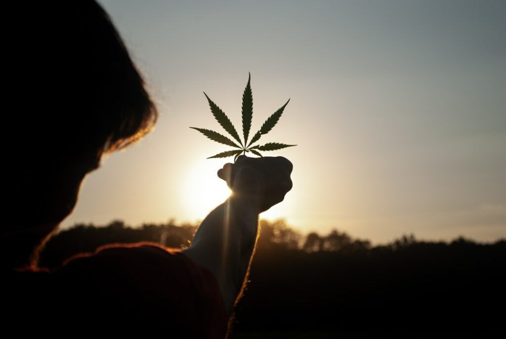 What to Look for When Investing In Cannabis?