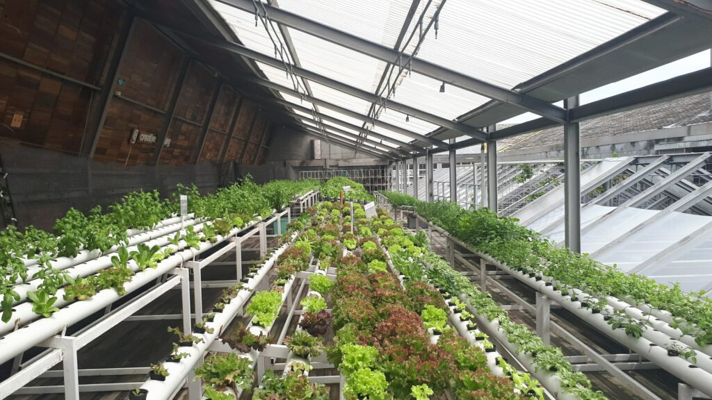 Vegetable-in-greenhouse-save-money